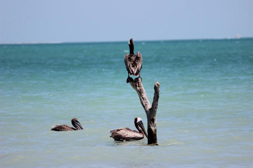 isla-aguada-campeche